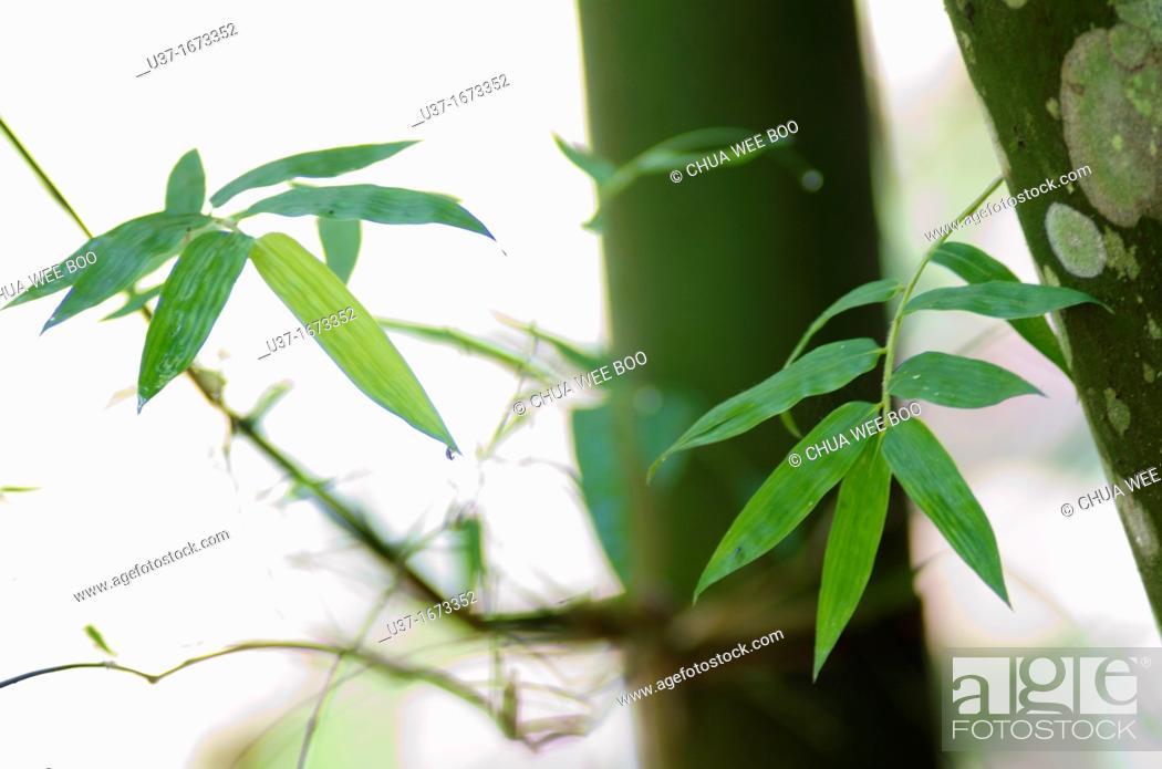 Imagen: Bamboo Garden in Semengoh Wildlife Centre, Sarawak, Malaysia.