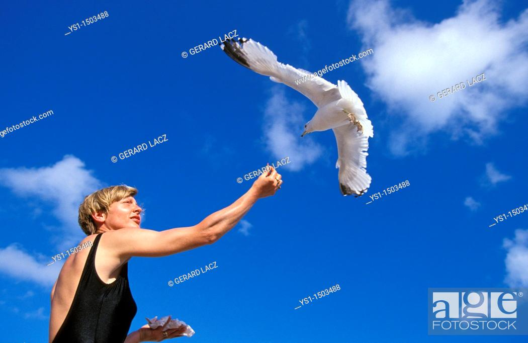 Imagen: Ring Billed Gull, larus delawarensis, Woman giving Food, Bird in Flight, Florida.