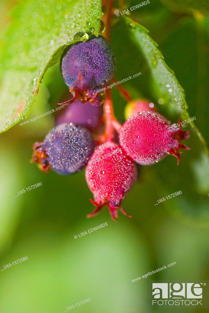 Stock Photo: Colorful berries.