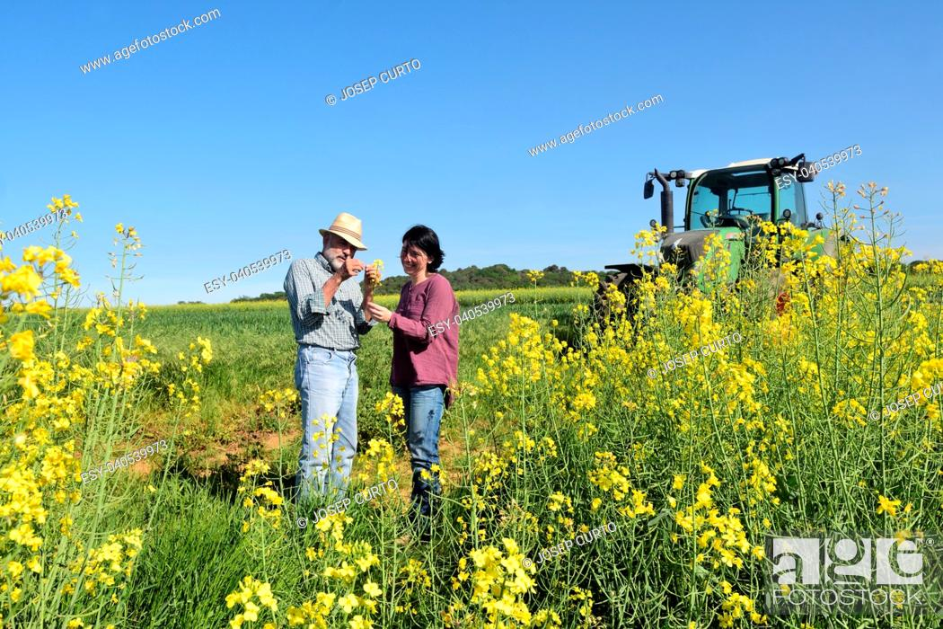 Imagen: couple of farmers in a canola field with a tractor.Porqueres, Girona, Catalonia, Spain.