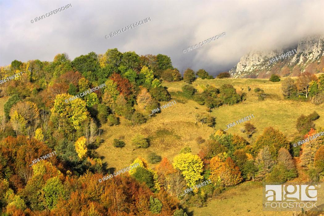 Stock Photo: Irati Forest, Navarre, Spain.