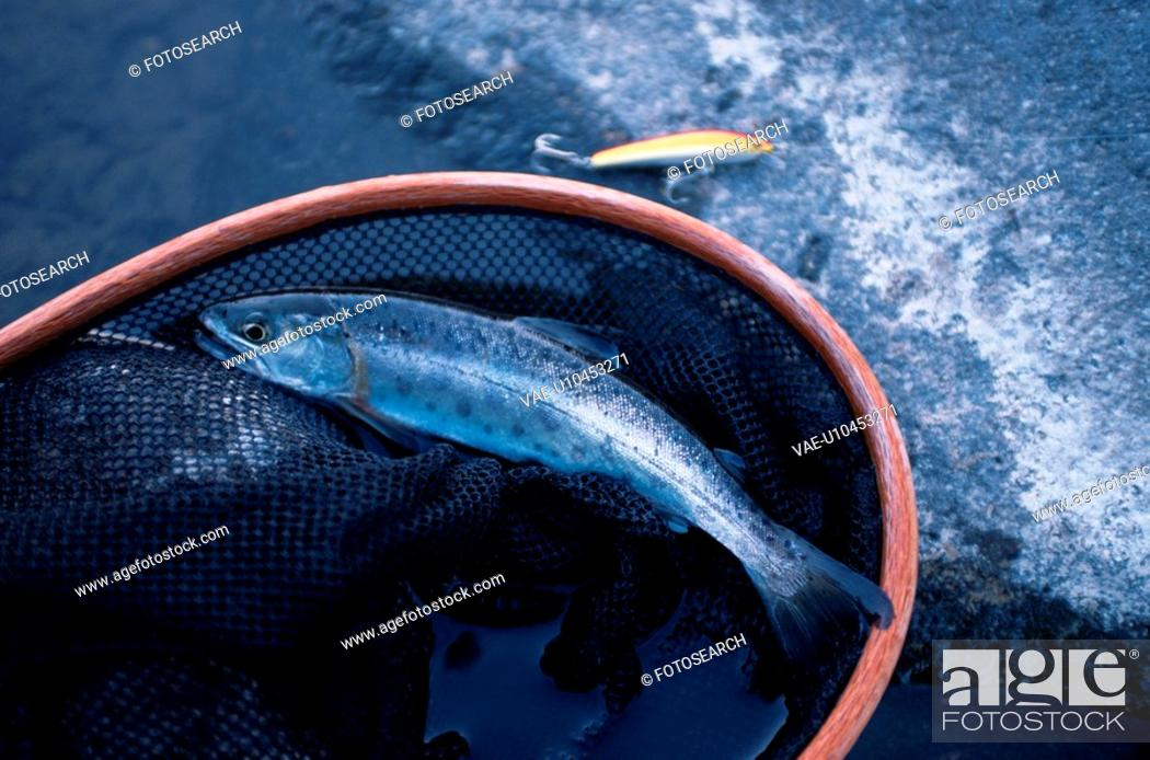 Stock Photo: Fish And Fishing Equipment.