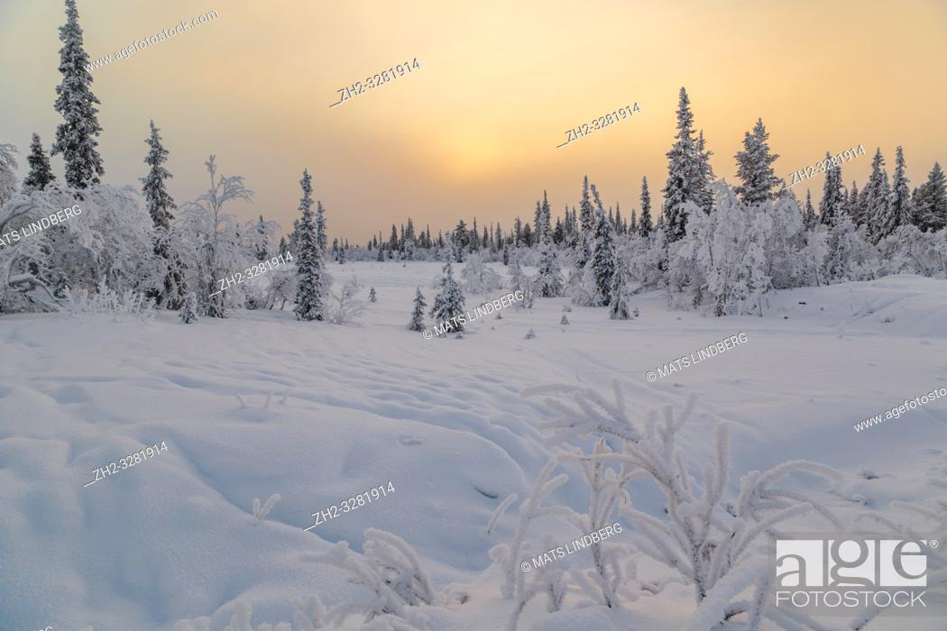 Stock Photo: Landscape in winter season, sun behind clouds making the sky orange, nice colorful sky, Gällivare county, Swedish Lapland, Sweden.