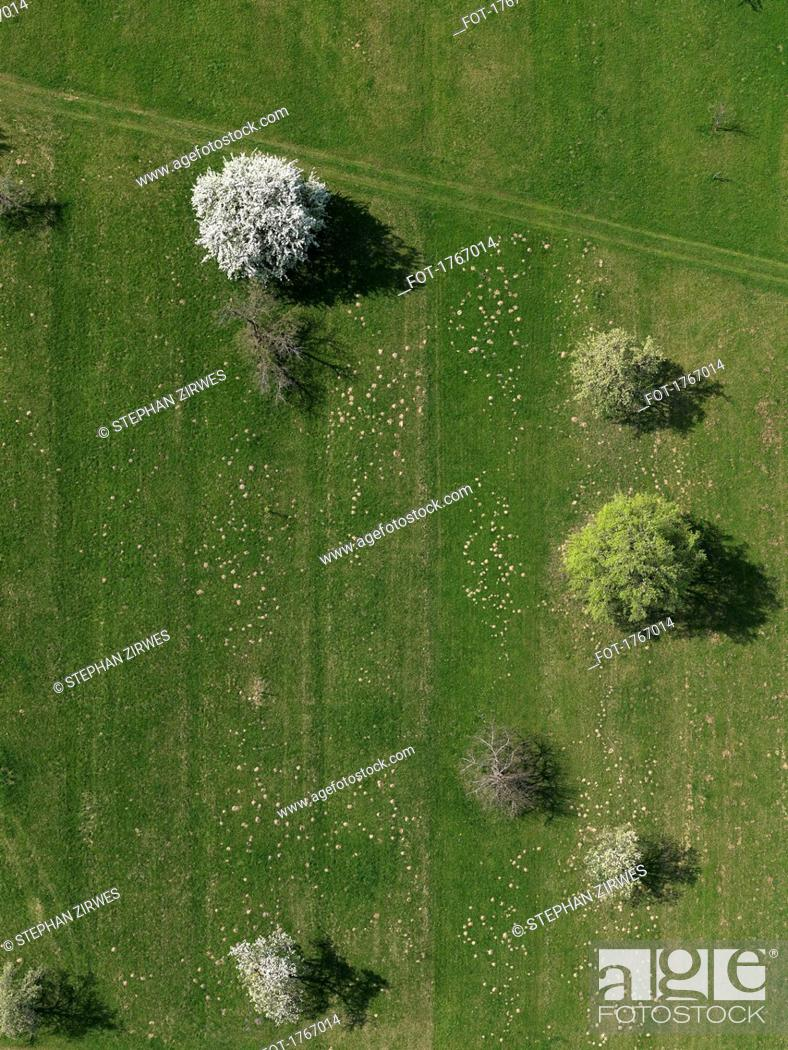 Stock Photo: Aerial view rural green field and trees, Hohenheim, Baden-Wuerttemberg, Germany.