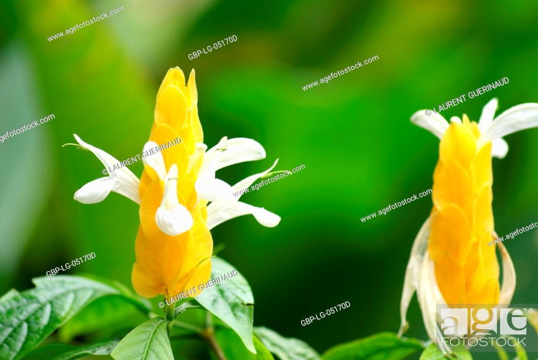 Stock Photo: Flower, North Coast, Camburi, São Paulo, Brazil.