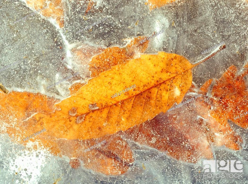 Stock Photo: leaf, nature, winter, season, plant, film.