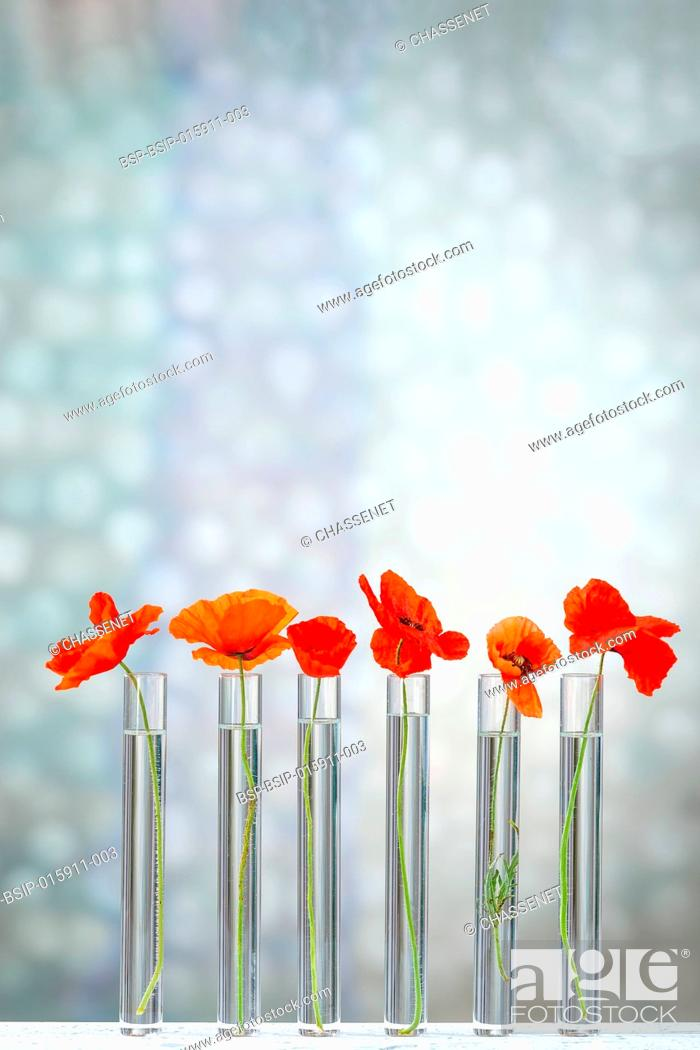 Imagen: Poppies in test tube for herbal medicine and medicinal research.