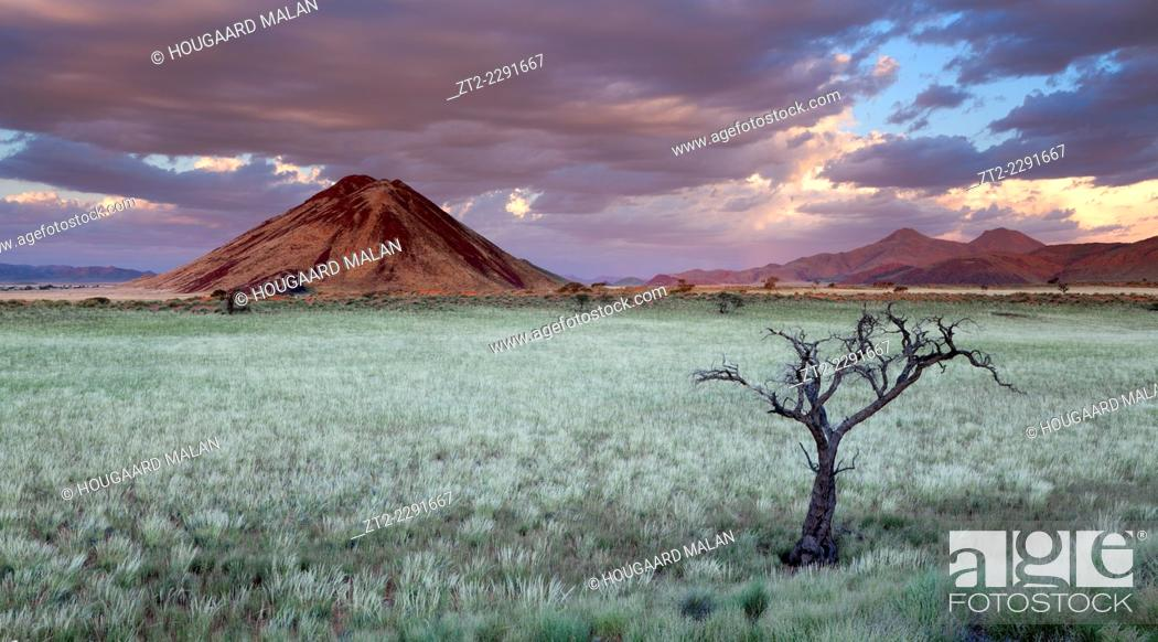 Stock Photo: Storm Cloud hang over the mountains and a dead tree in a green desert landscape after plentiful rains. Namib Rand, Namibia.