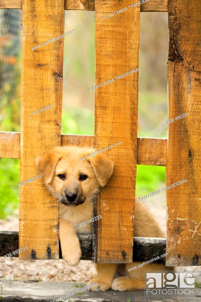 Stock Photo: Puppy looking through fence.