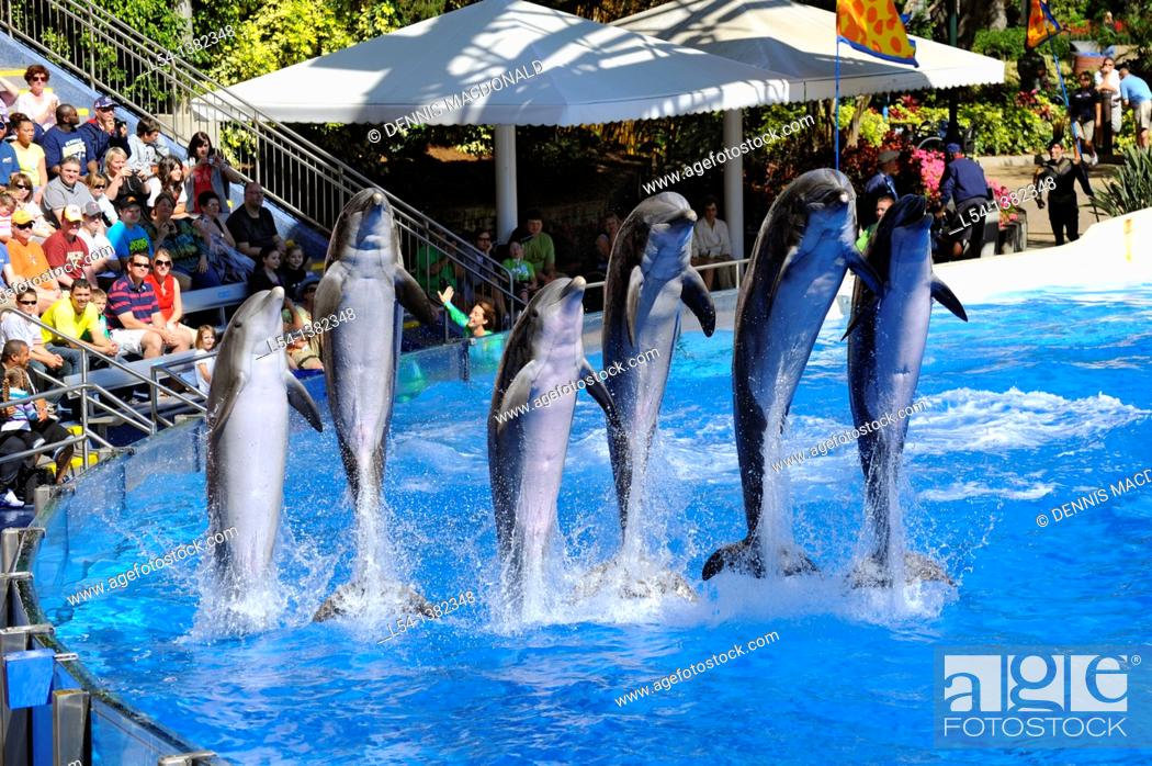 Stock Photo: Sea World Adventure Theme Park Orlando Florida Dolphin show.