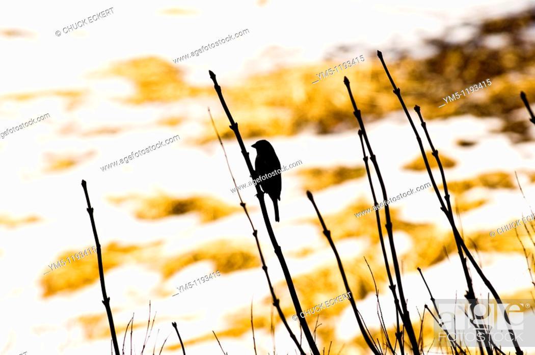 Stock Photo: Springtime Bird Silhouette.