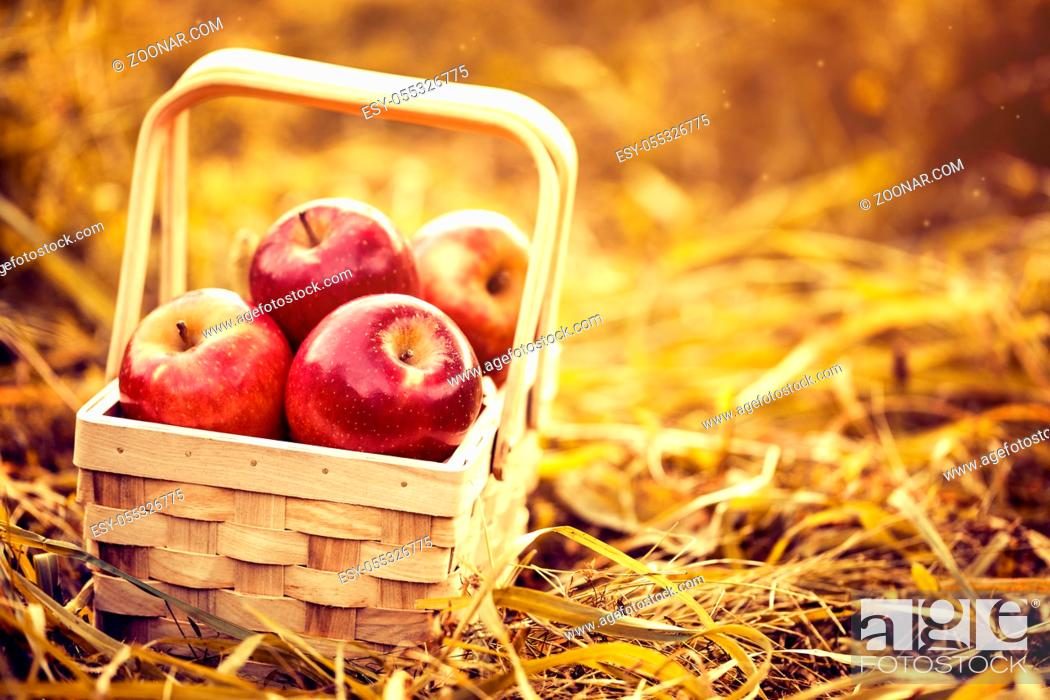 Stock Photo: Beautiful red tasty fresh apples in wooden basket on natural background. Harvest Autumn Summer Farming Concept Horizontal with Copy Space Closeup Toning.