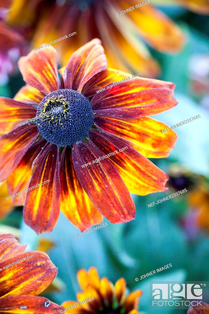 Stock Photo: Orange and yellow flower.