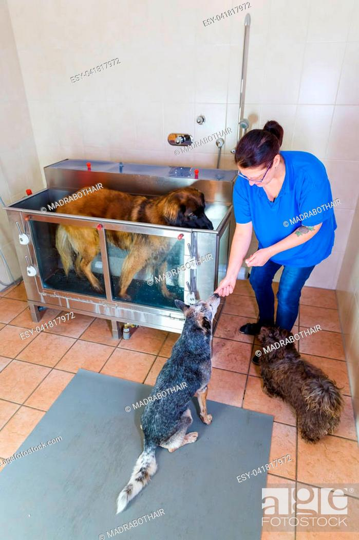 Stock Photo: picture of a woman who works with dogs at a hydrotherapy station.