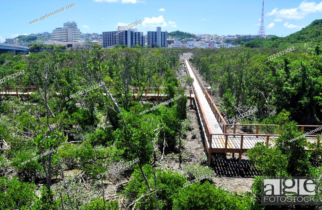 Stock Photo: Naha, Okinawa, Japan: Manko Waterbird and Wetland Center.