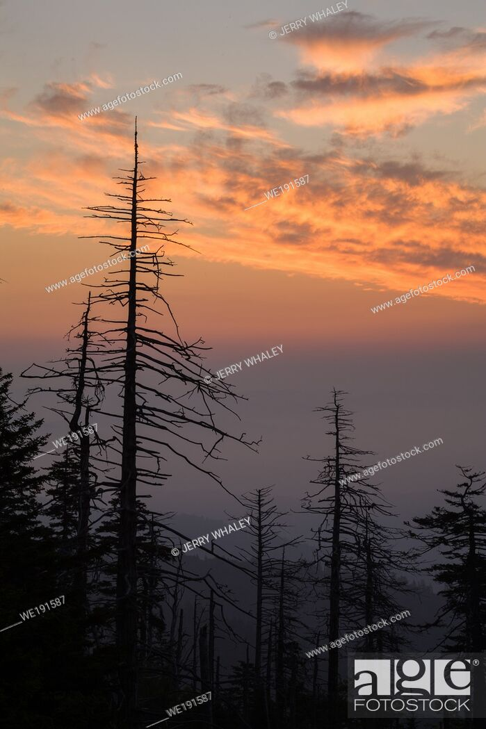 Imagen: Sunrise over a Dying Forest at Clingmans Dome in the Great Smoky Mountains National Park.