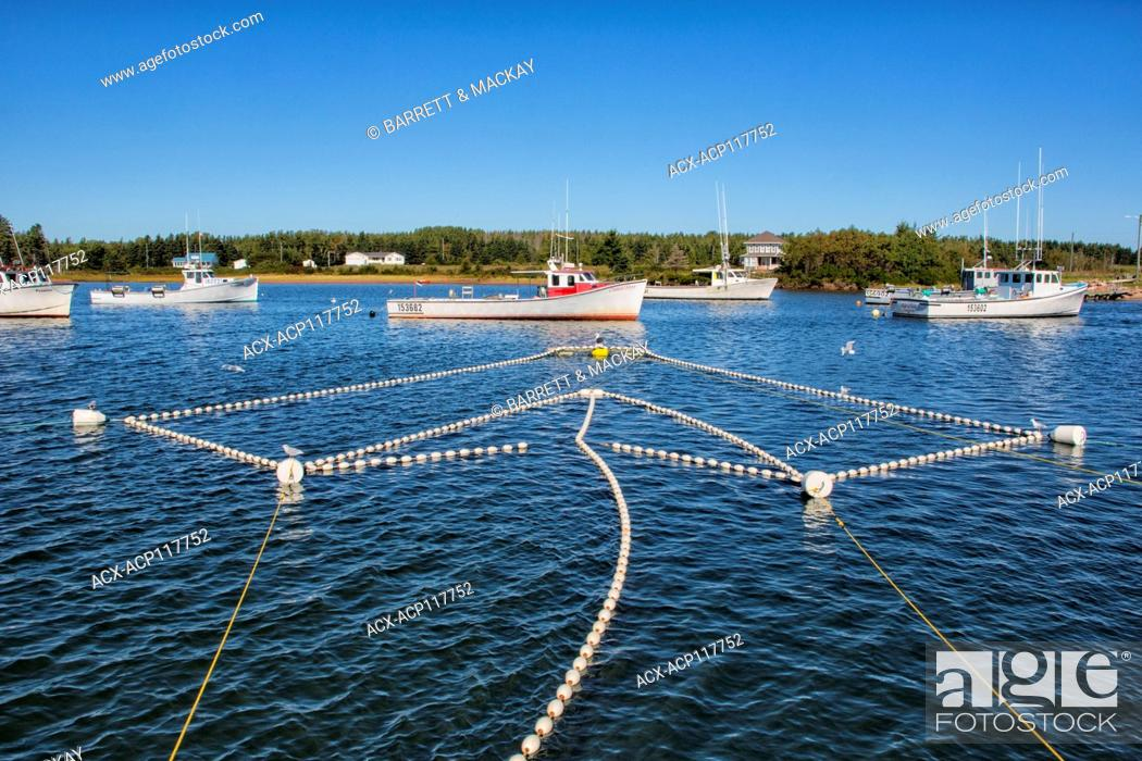 Stock Photo: Silverside fish nets and fishing boats, Graham Pond, Prince Edward Island, Canada.