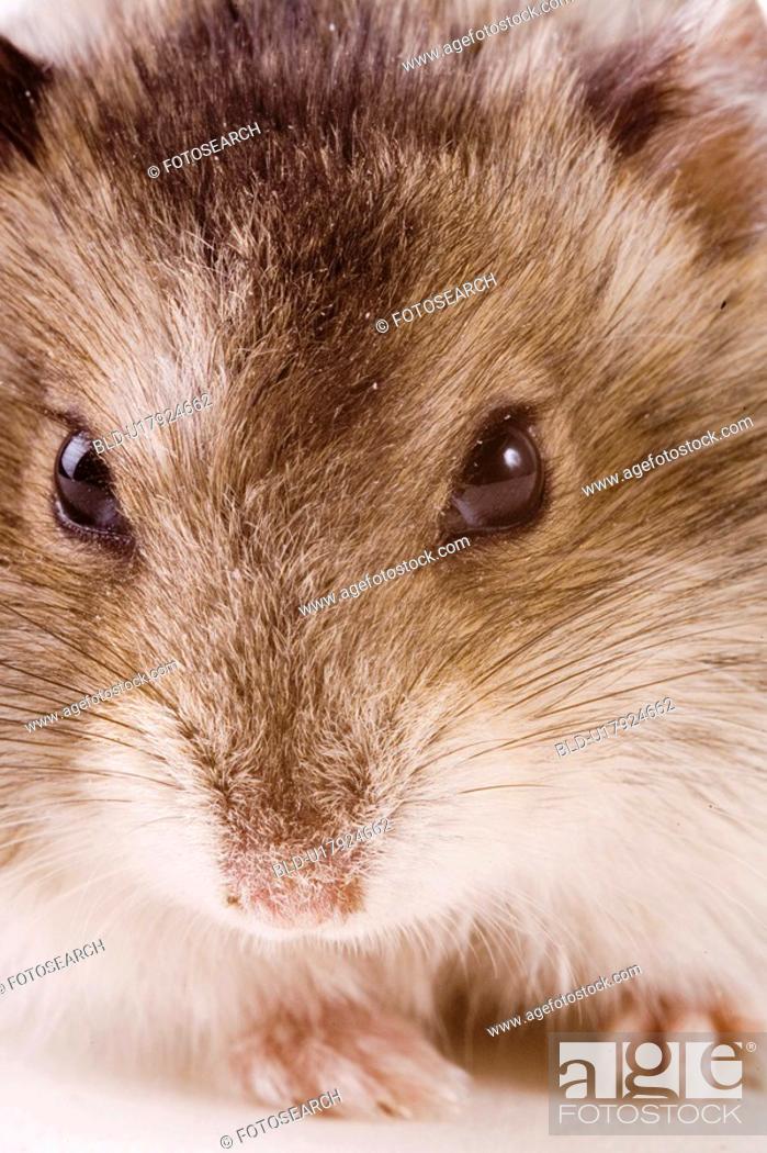Stock Photo: animal, curiosity, close-up, animals, alfred.