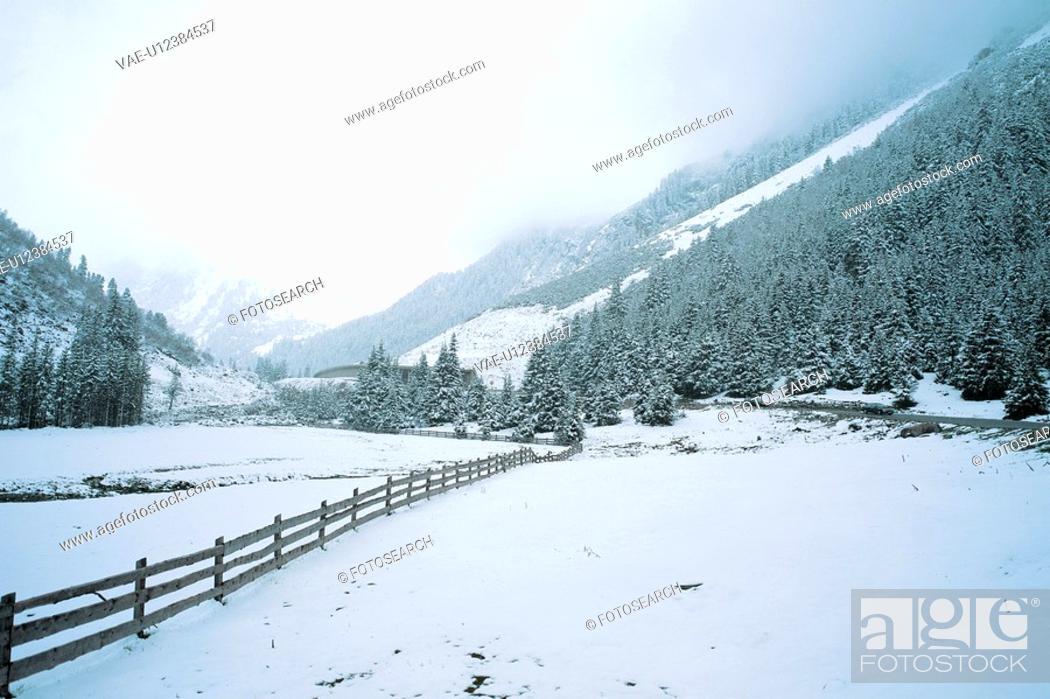Stock Photo: snowscape, snow, natural phenomenon, winter, mountain, scenery, tree.