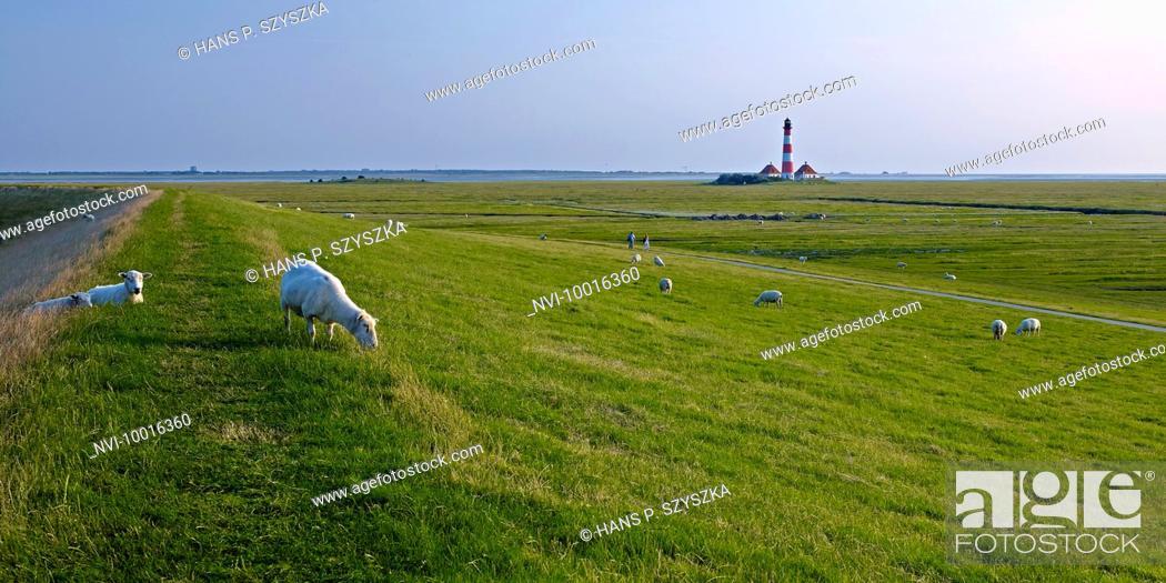 Stock Photo: Lighthouse Westerheversand, Eiderstedt peninsula, North Frisia, Schleswig-Holstein, Germany.