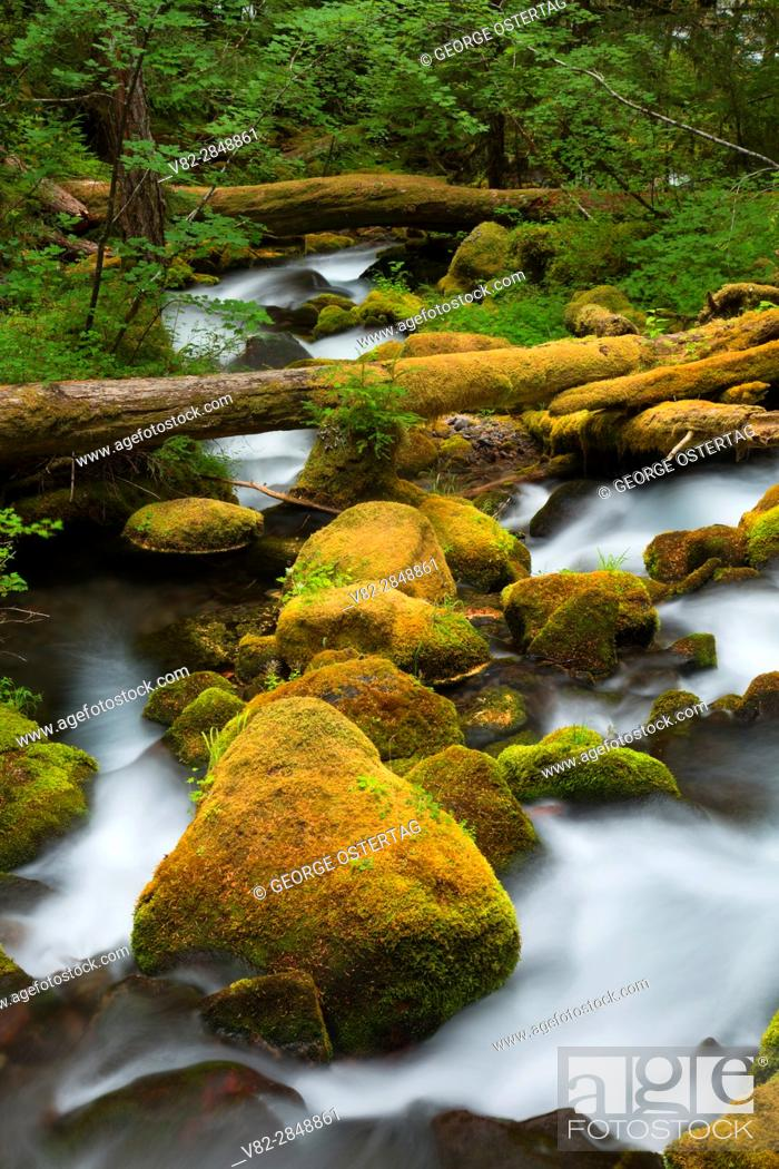 Stock Photo: Roaring Creek along South Breitenbush Gorge National Recreation Trail, Willamette National Forest, Oregon.