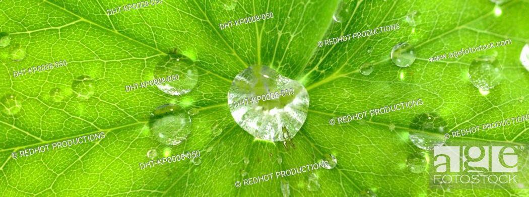 Stock Photo: One green Leaf with dew.