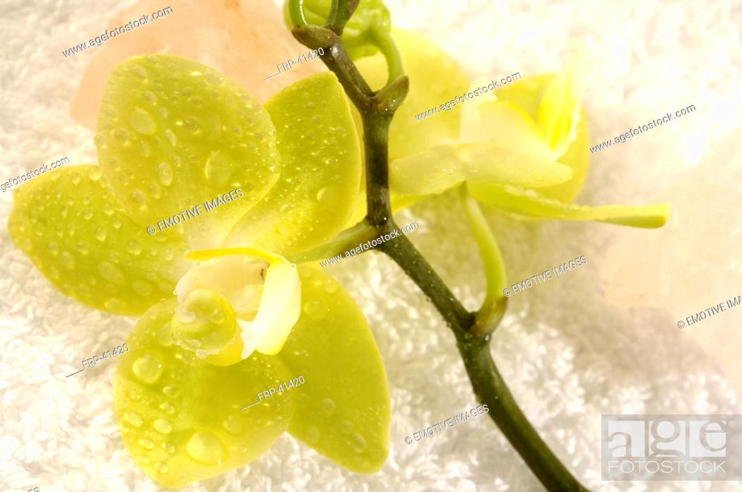 Stock Photo: Orchid with salt crystal.