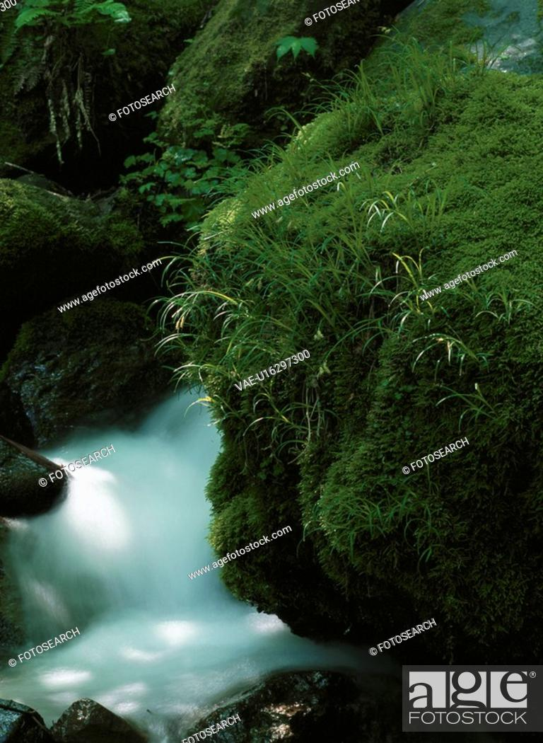 Stock Photo: Rock Covered In Moss.