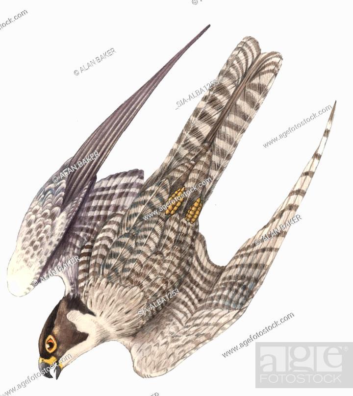 Imagen: Bird nose-diving on white.