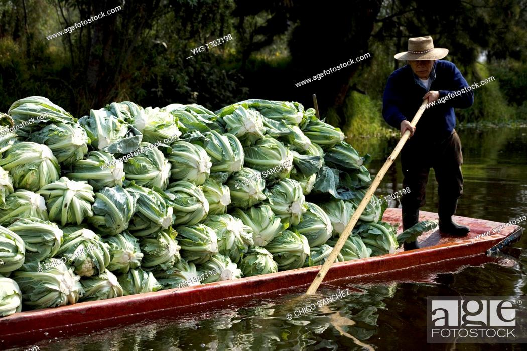 Stock Photo: A man carry vegetable in a boat in the water canals of Xochimilco in southern Mexico City, January 18, 2009  The water canals and gardens in Xochimilco was once.