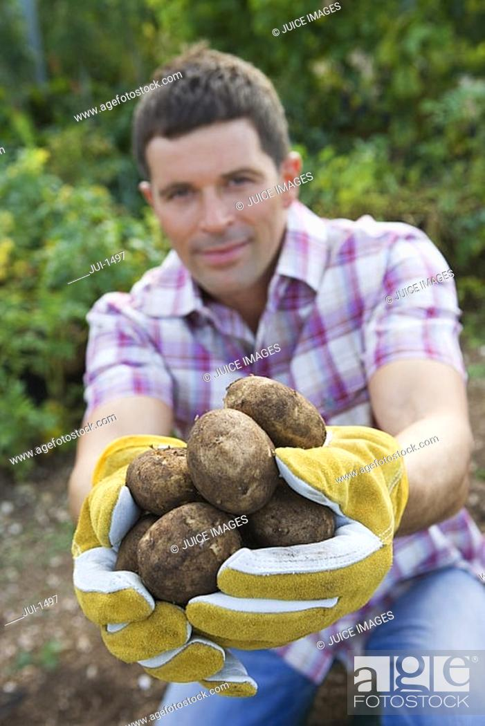 Stock Photo: Man kneeling in vegetable garden, holding bunch of potatoes, smiling, portrait.