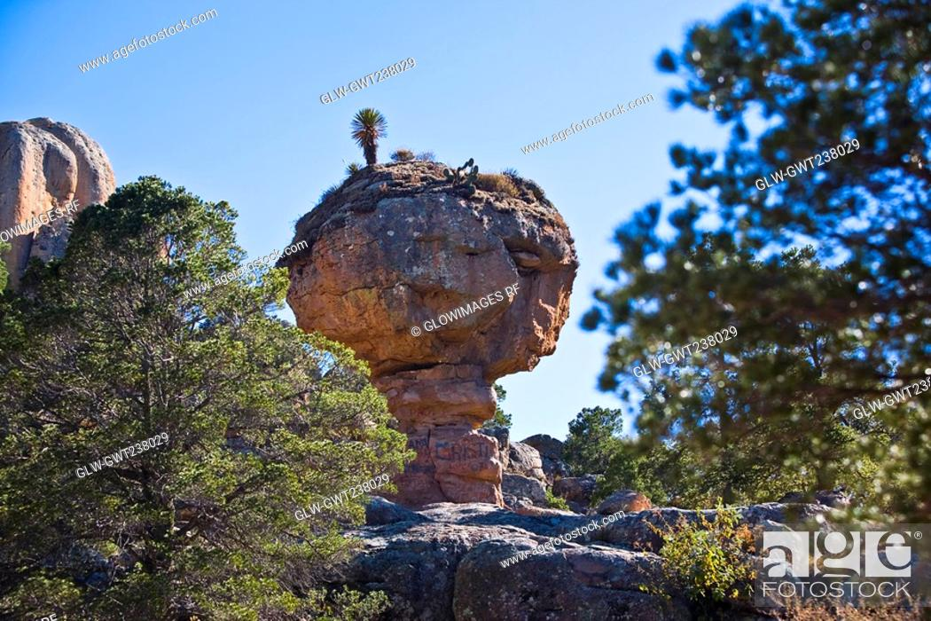 Stock Photo: Low angle view of rock formations in a forest, Sierra De Organos, Sombrerete, Zacatecas State, Mexico.
