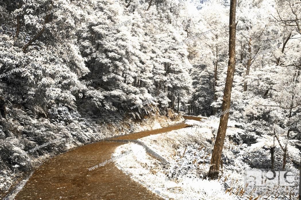 Stock Photo: Simulated infrared photography of forest in Sao Miguel island, Azores islands, Portugal. It actually looks like snow.