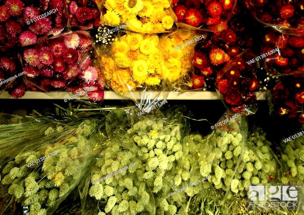 Stock Photo: geschaeft, abloom, bloom, blossom, CLOSE, close-up.