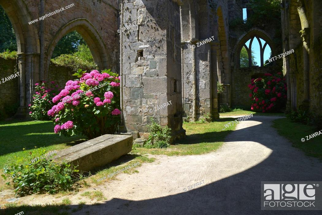 Imagen: Abbey in the interior, ruins, hydrangeas, tomb.