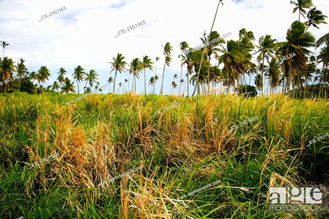 Stock Photo: Lifuka island. ha'apai islands. Tonga. Polynesia.