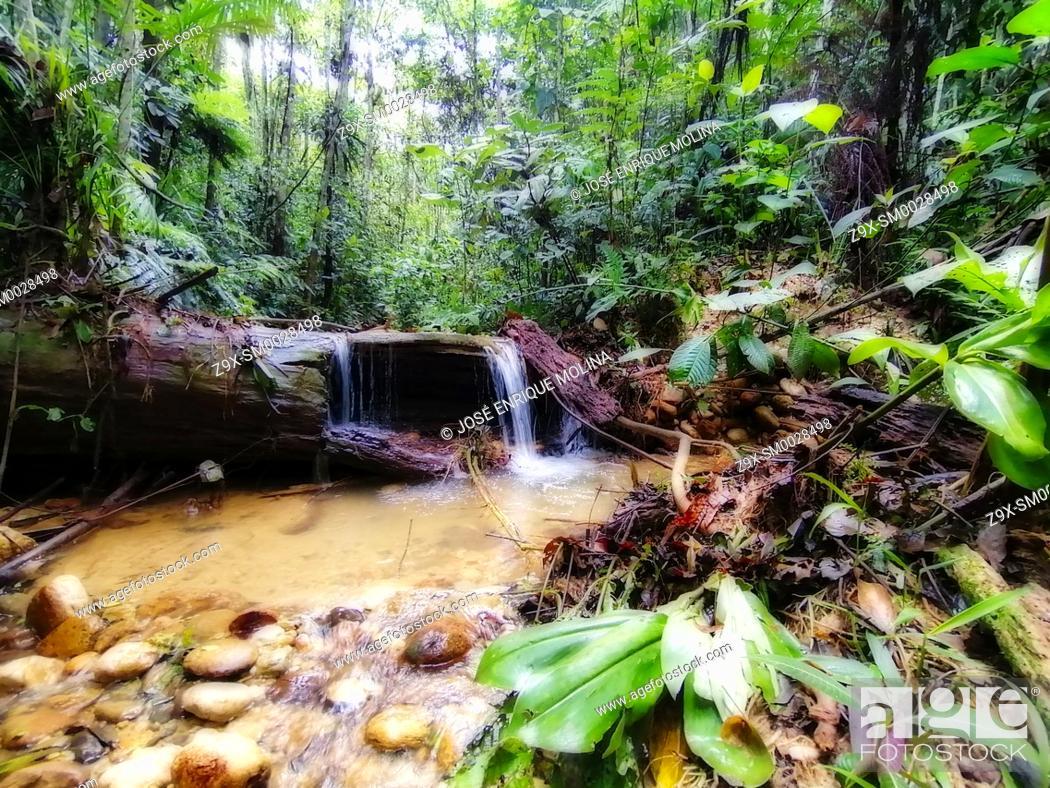 Stock Photo: Amazonian rain forest. Peruvian jungle. Huanuco department, Perú, South America.