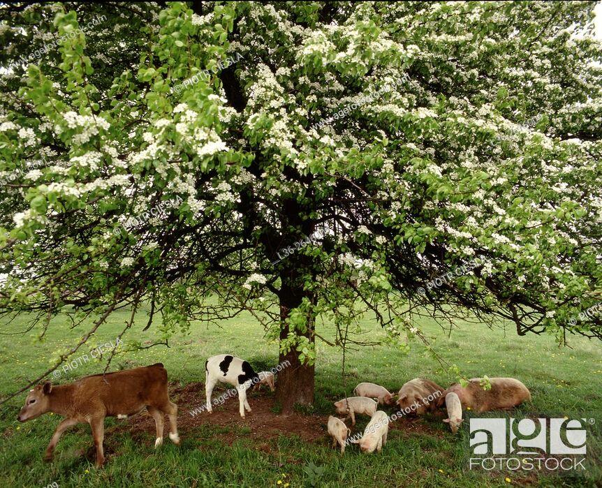 Stock Photo: Family life in the farm. Eastern Poland.