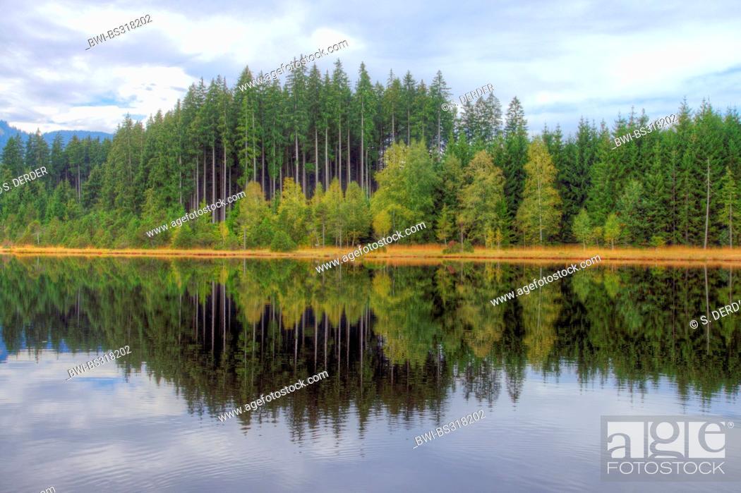 Stock Photo: lakefront mirroring in lake Wildsee, Germany, Bavaria, Oberbayern, Upper Bavaria.