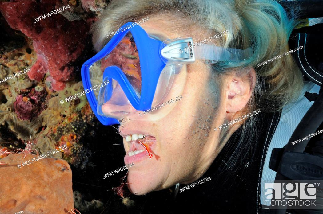 Stock Photo: Cleaner Shrimp cleaning Teeth of Scuba Diver, Lysmata amboinensis, Bali, Indonesia.