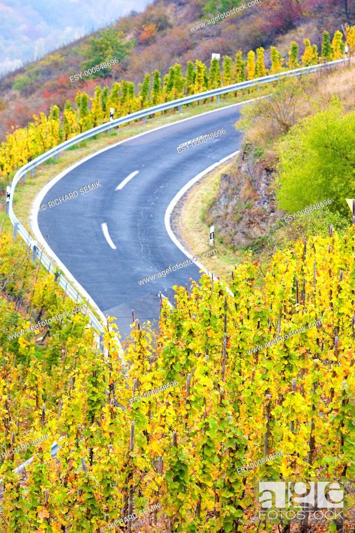 Stock Photo: vineyards near Pommern, Rheinland Pfalz, Germany.