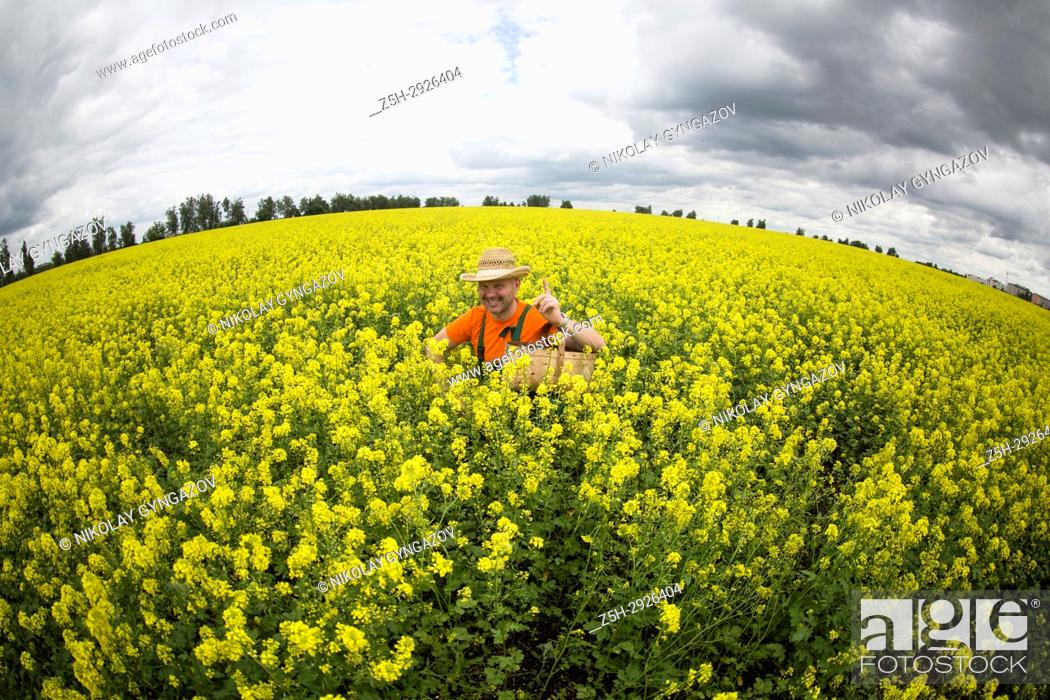 Stock Photo: A farmer in a mustard field.