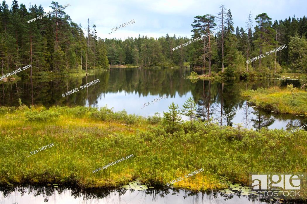 Stock Photo: Sweden - Finland wildlife 2.