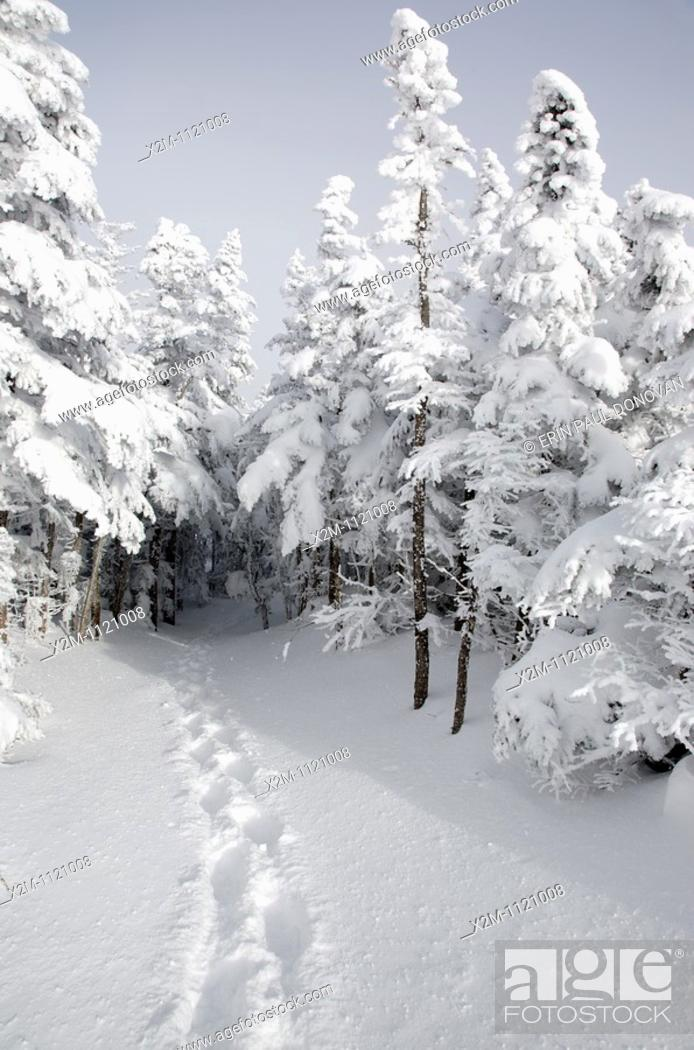 Stock Photo: Mount Osceola Trail on the summit of Mount Osceola in the White Mountains, New Hampshire USA during the winter months.