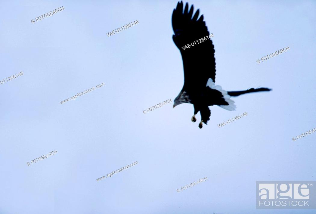 Stock Photo: wild animal, nature, flying, sky, scene, animal, landscape.