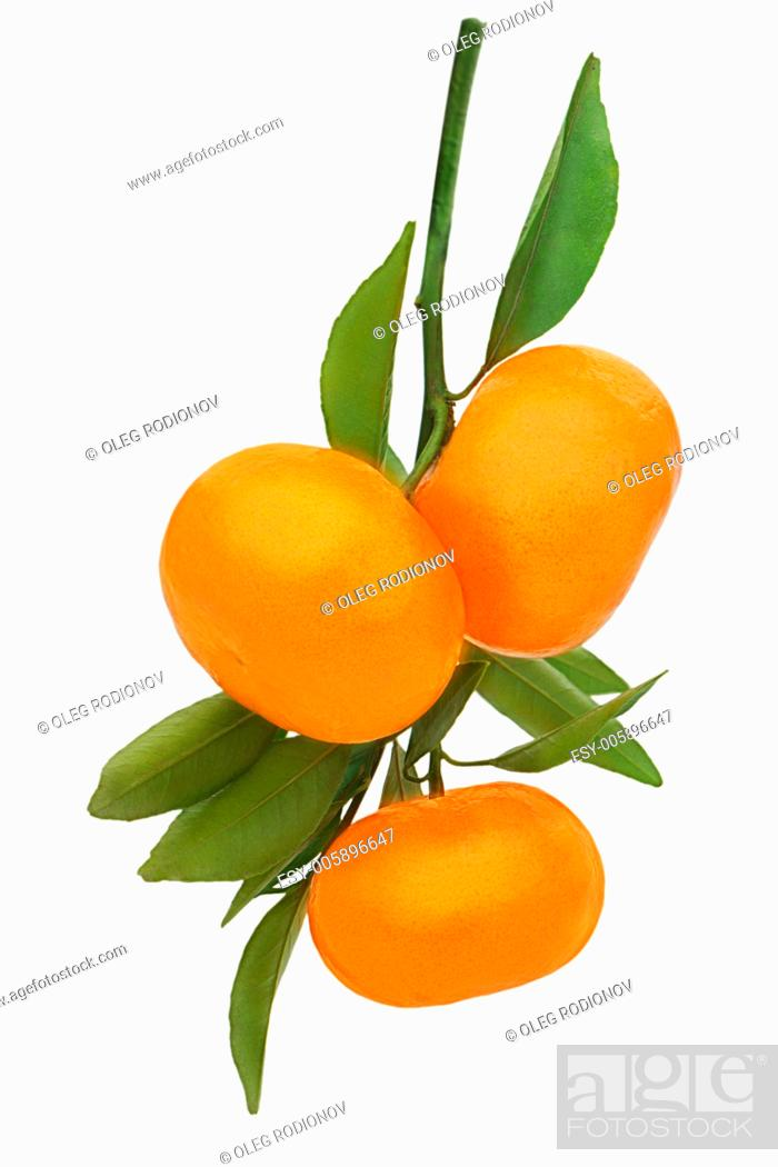 Stock Photo: Fresh ripe tangerines with green leaves isolated on white background.