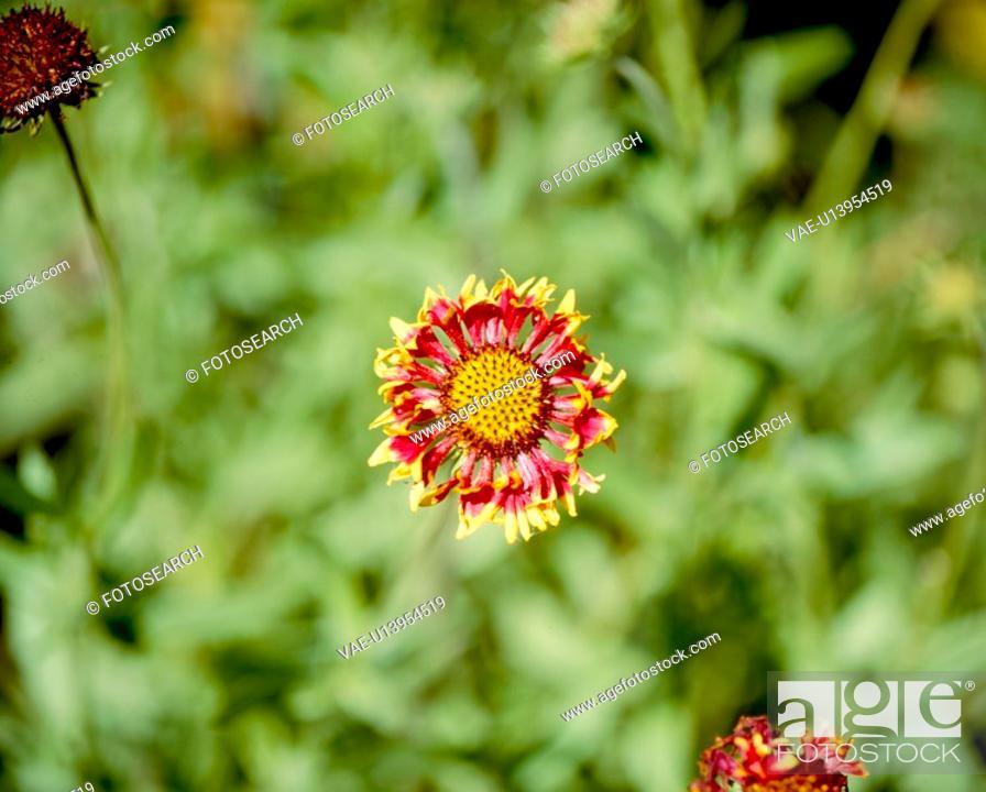 Stock Photo: multi-color flowers, nature, flowers, flower, scene, wildflower, landscape.