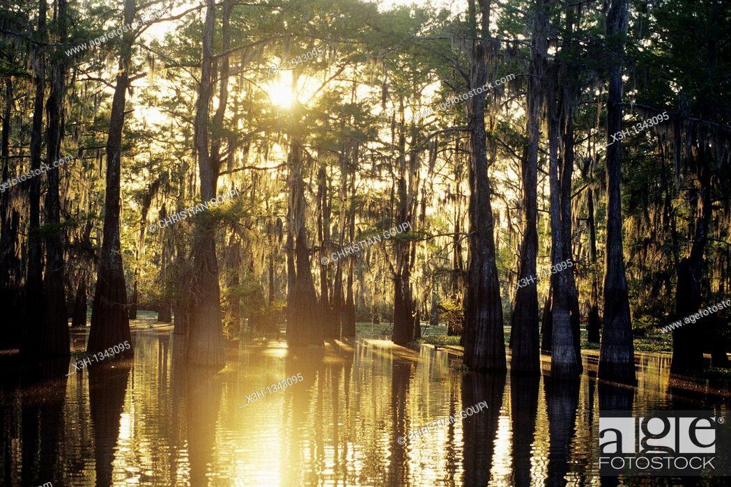 Stock Photo: Atchafalaya Basin, Henderson, Louisiana, United States of America, Americas.