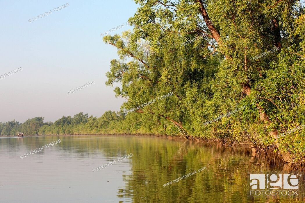 Imagen: The Sundarbans, a UNESCO World Heritage Site and a wildlife sanctuary The largest littoral mangrove forest in the world, it covers an area of 38, 500 sq km.