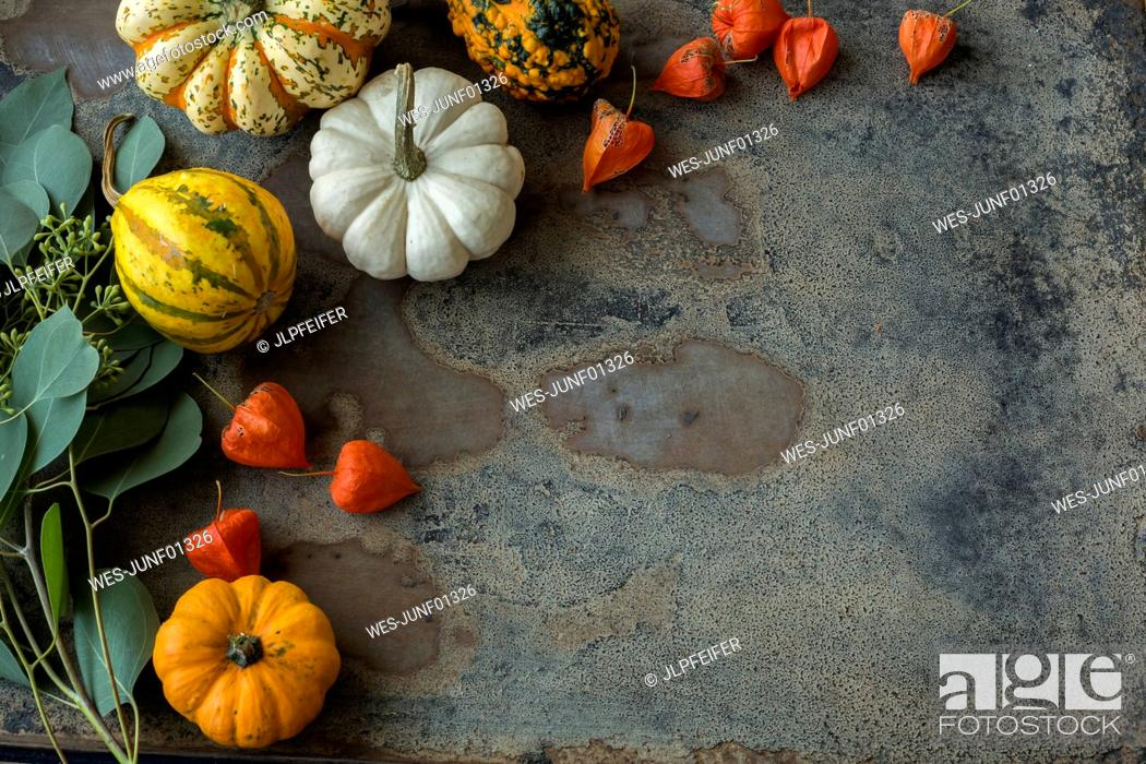 Stock Photo: Autumnal decoration, ornamental pumpkins.